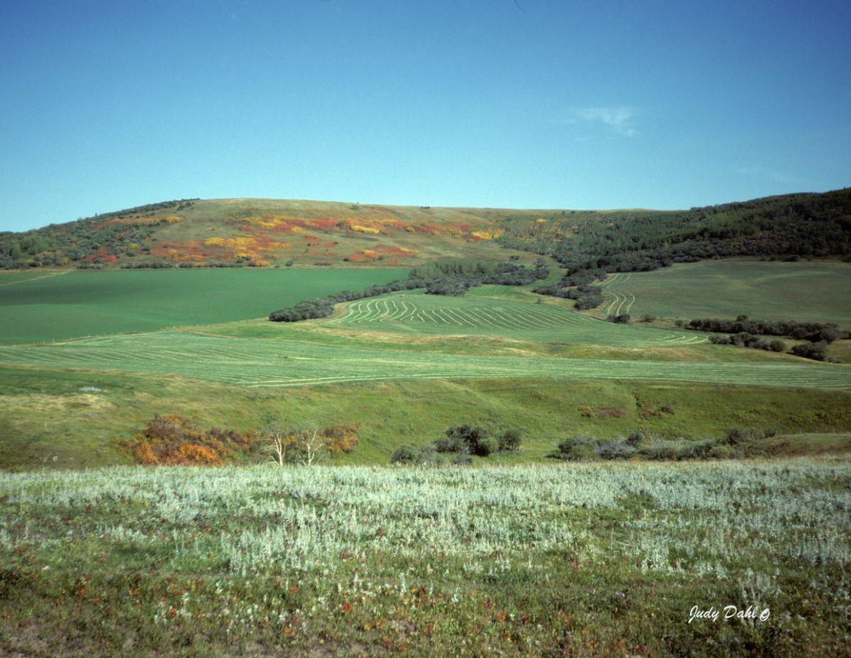 Southern Alberta Hay Field